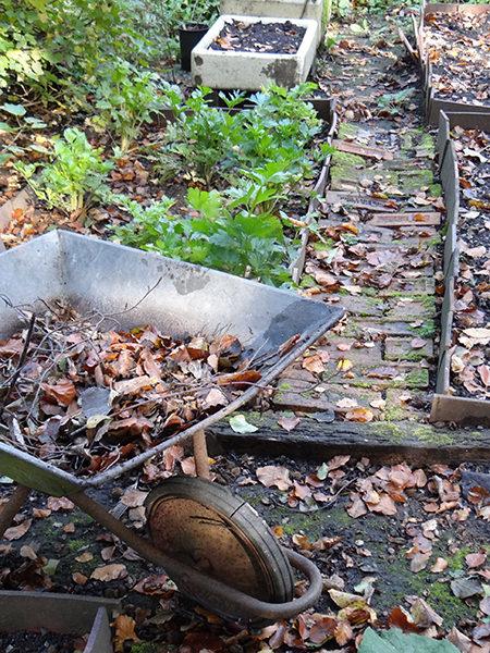 collecting fallen leaves into a wheelbarrow