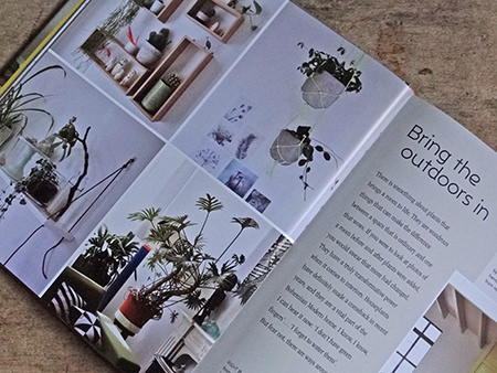 Using plants in interiors