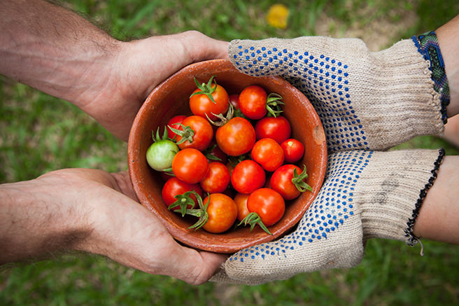 Someone wearing gardening gloves handing over a bowl of tomatoes